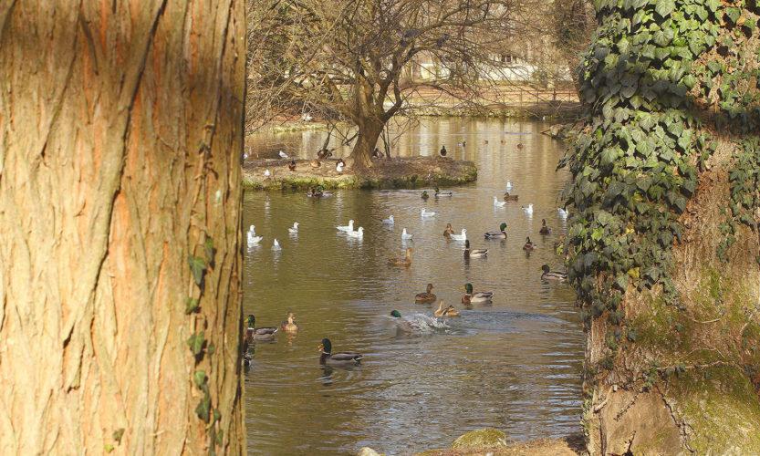 Incursione invernale – Parco di Monza - Gallery Slide #13