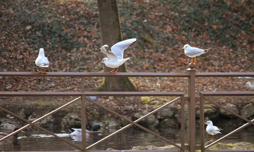 Incursione invernale – Parco di Monza - Gallery Slide #46